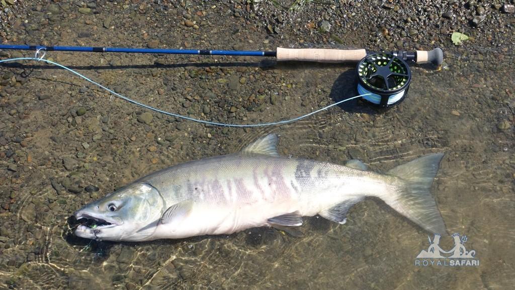 Канада: рыбалка нахлыстом
