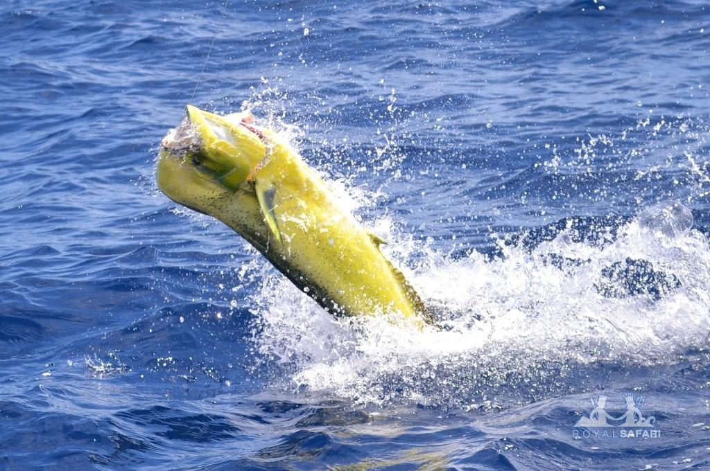 Актриса татьяна рыбинец фото такси одессе