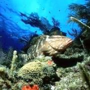 подводные донные