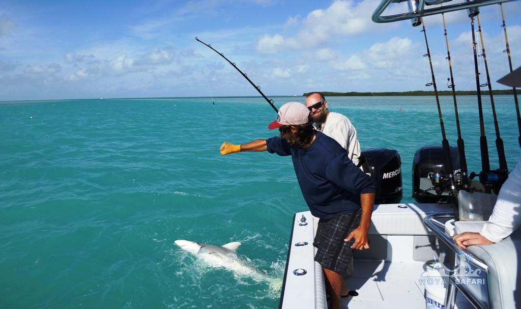 рыбалка троллинг на море